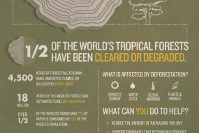 Deforestation Info Graphic